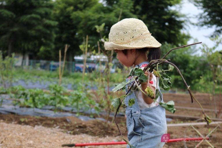 芋 掘り 時期