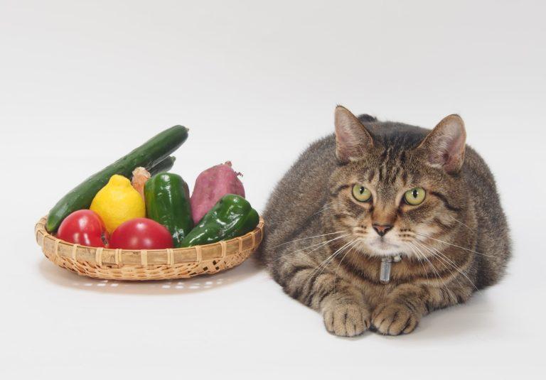 猫にさつまいもをあげても大丈夫?安全な量と食べさせ方
