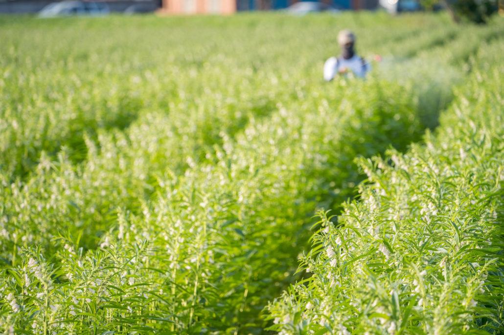 農薬を散布する男性