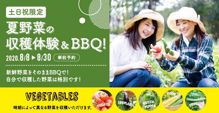 夏野菜の収穫体験&BBQ!